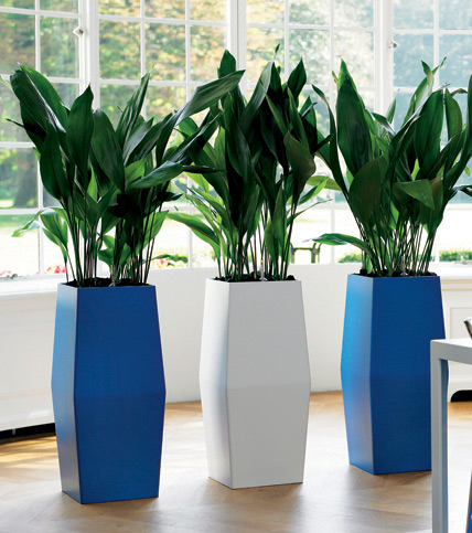 Indoor blue planters